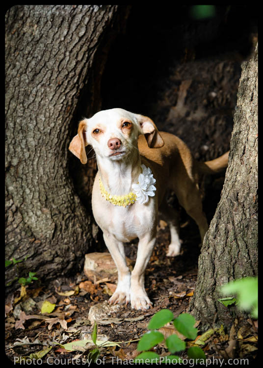 St Charles Pet Photographer - Rescue Dog